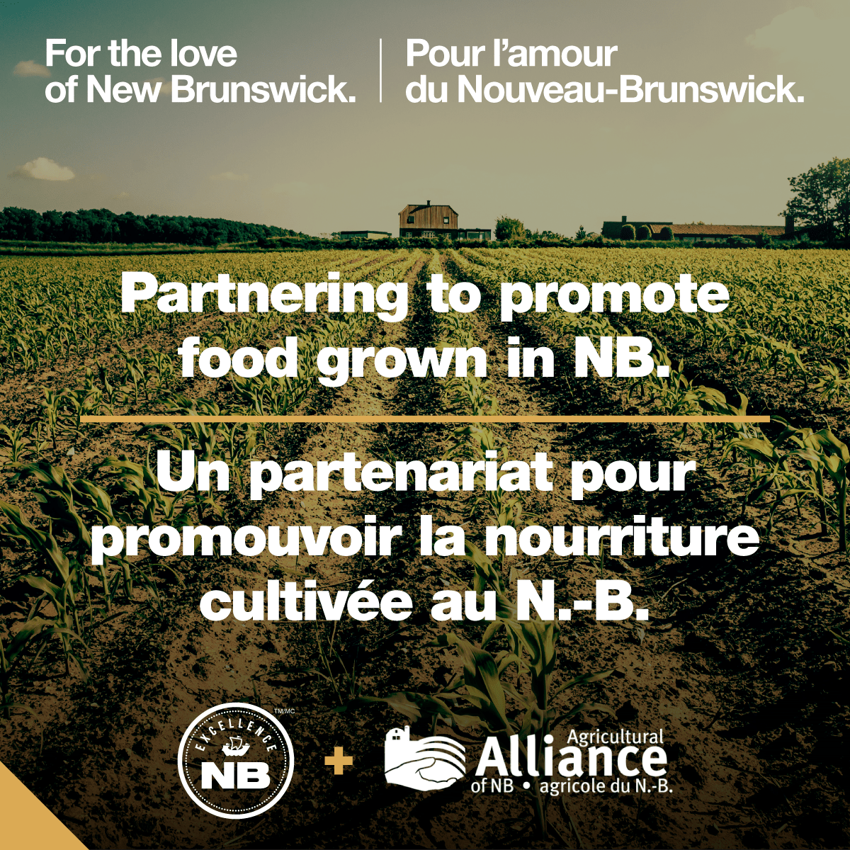 For the love of New Brunswick
